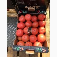 Компания заключает договор на поставку томатов оптом