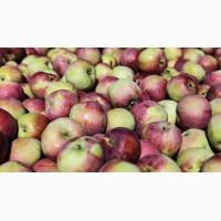 Продажа яблок оптом в больших количествах, Черновцы