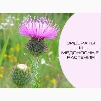 Семена медоносных растений (медоносные растения, семена)