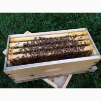 Продам бджолопакети (відводки)