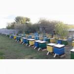 Продам бджолопакети 2020, порода Карпатка, Харьковская обл