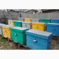 Продам 9 бджолосімей української степової породи