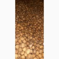 Приймаємо замовлення на експорт Грецького горіха, Полтавская обл