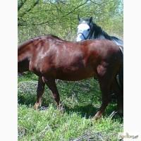 Продам коня 12 11 років