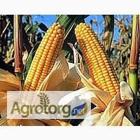 Семена гибрида кукурузы Даниил высокоурожайный засухоустойчивый