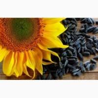 Давальницька переробка насіння олійних культур (ріпак, соняшник, льон, соя)