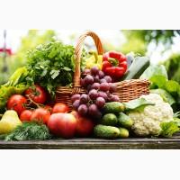 Предлагаю поставки продуктов питания со своего тепличного хозяйства в Киевской области