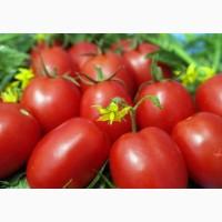 Куплю помідори оптом