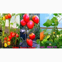 Свои семена.продажа.интернет магазин семян донецк луганск