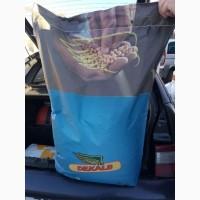 Насіння кукурудзи ДКС 4685 Монсанто (ФАО 340)