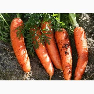 Продам морковь Канада f1