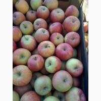 Яблоко с сада и хранилища урожай 2020
