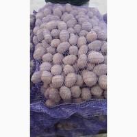 Продам посевной картофель Галлу 4+ с места в Киеве 7, 80 кг