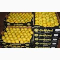 Продажа лимонов