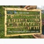 Пчелопакеты Карпатской пчелы и плодные матки. Доставка по Украине
