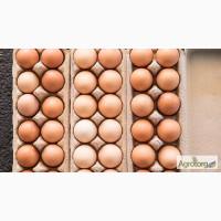 Продам яйцо куриное СО, С1, С2, Сгр