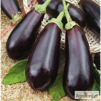 Семена баклажан оптом и в розницу компании Lucky Seed
