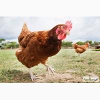 Куриный помет гранулированный, органическое удобрение 5:3:3