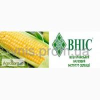 Продам гібрид кукурузи АМАРОК