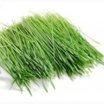 Продаю лек. травы и готовые сборы трав в Киеве и по всей Украине