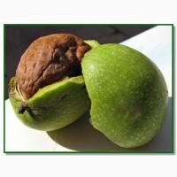 Продам грецкий орех в зеленой кожуре оптом от 500 кг до 5 тонн