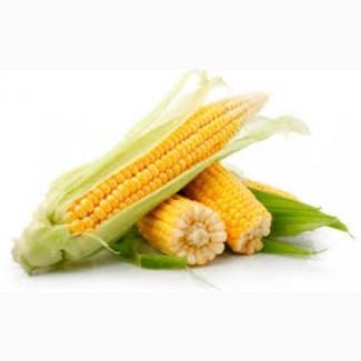Предприятие производит закупку кукурузы