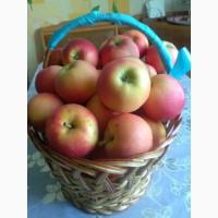 Продам яблоки на переработку с своего Сада