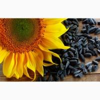 Продам подсолнечный жмых (макуху) жаренный и сыродавку