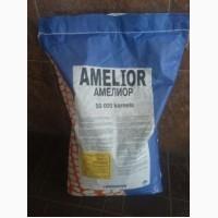 Насіння кукурудзи Амеліор (ФАО 240)