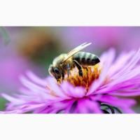 ТЕРМІНОВО продамо бджоли