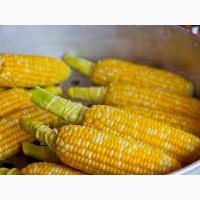 Купимо кукурудзу. Самовивіз