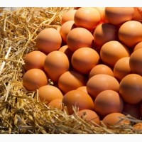 Продам яйцо Производитель