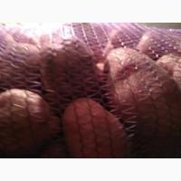 Реализуем картошку Черновцы со склада красных и белых сортов