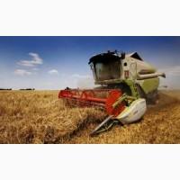 Купим кукурузу с поля по територии Украины