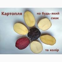 Продаж насіннєвої картоплі, еліта від оригінатора, картопля на посадку