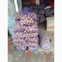 Продам картоплю велику танасинньову