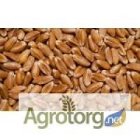 Куплю пшеницу