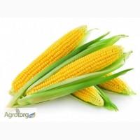 Закупаем кукурузу по Луганской области