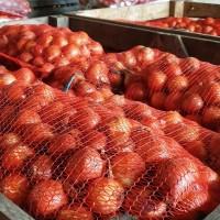 Лук репчатый урожая 2020 г./ Onion crop 2020