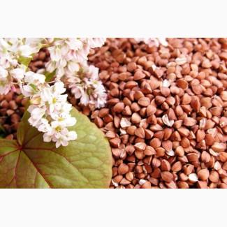 Купуємо зерно гречки, вівса, проса, ячменю, пшениці, кукурудзи