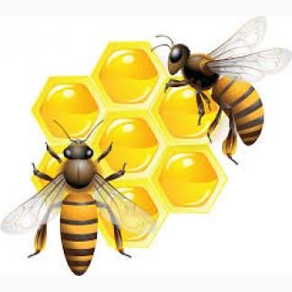 Закупаем мед в Днепропетровской области