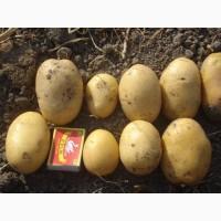 Картофель сорт Агата сверхранний 1 репродукция, 3 кг, сетка