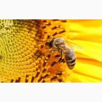 Куплю мёд, продукты пчеловодства