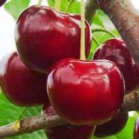 Куплю вишни