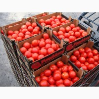 Помидоры оптовая продажа доставка реализация томаты