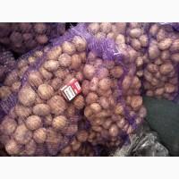 Оптовая продажа картофеля товарного