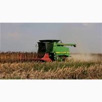 Закупаем зерновые: Кукуруза