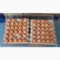 Продам куриное яйцо на экспорт