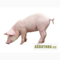 Концентрат для свиней Гровер/Финишер 15 - 10% (Голландия) только соевый протеин 290 грн/м