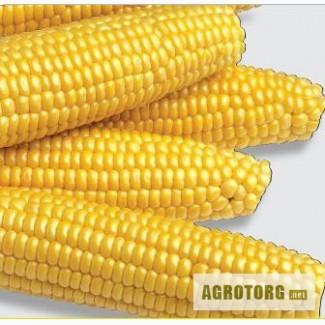 Реалізуємо насіння кукурудзи цукрової